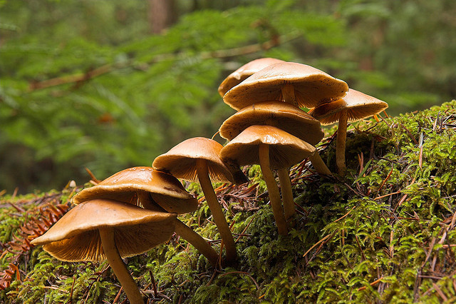 Fall Creek mushrooms (Flickr: Jim Bahn)
